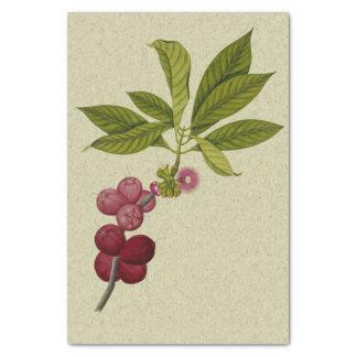 Papier Mousseline Copie botanique rose d'Apple