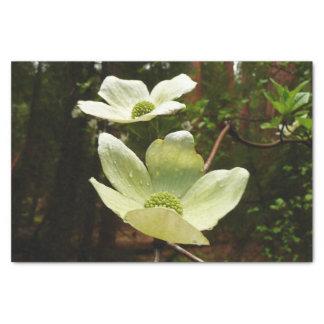 Papier Mousseline Cornouillers et séquoias en parc national de
