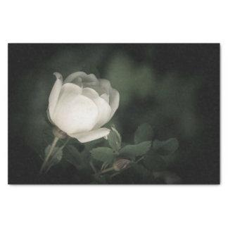 Papier Mousseline Dogrose blanc sur un fond foncé