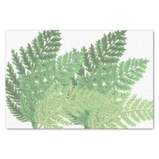 Papier Mousseline Fougères de vert de mousse