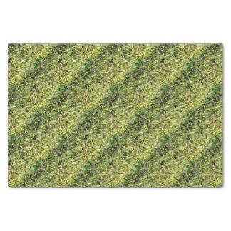 Papier Mousseline Haricots verts…