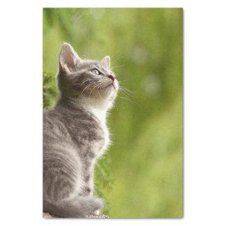 Papier Mousseline Le chaton gris et blanc minuscule scrute jusqu'au
