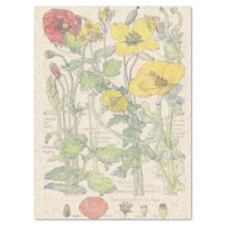 Papier Mousseline Le fleur sauvage vintage de pavot fleurit le
