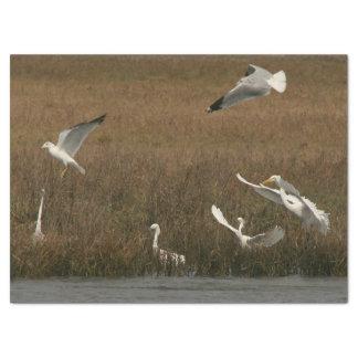 Papier Mousseline Papier de WetlandTissue de faune d'oiseaux de