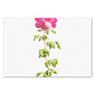 Papier Mousseline Photo de rose de rose