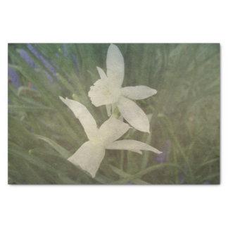 Papier Mousseline Photo vintage poussiéreuse de Thalia de jonquille