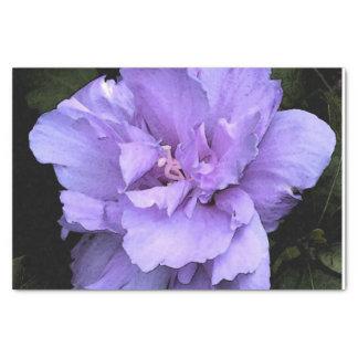 Papier Mousseline Rose de lavande de Sharon