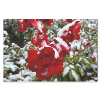 Papier Mousseline Roses rouges couverts par la neige et le givre