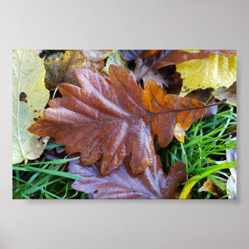 Papier poster (mat), Feuilles d'automne