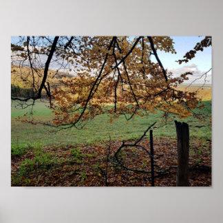 Papier poster (mat), Forêt