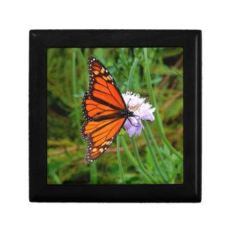 Papillon alimentant sur une fleur boîte à souvenirs