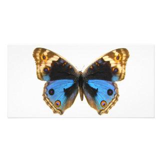 Papillon bleu de pensée cartes de vœux avec photo