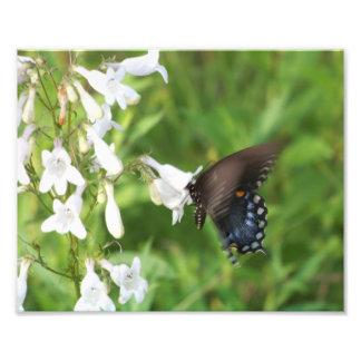 Papillon bleu et fleurs sauvages blancs impression photo