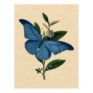 Papillon bleu vintage carte postale
