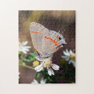 Papillon de Hairstreak bleu sombre sur le puzzle
