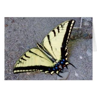Papillon de machaon avec la carte de note de