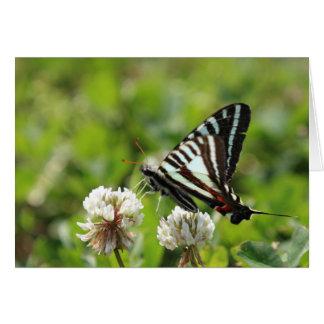 Papillon de machaon de zèbre carte de vœux