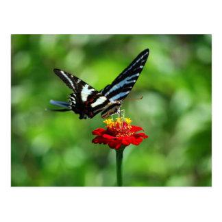 Papillon de machaon de zèbre sur la carte postale
