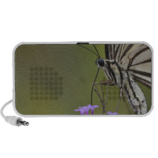 Papillon de machaon sur la fleur, Chiba Haut-parleurs Mobiles