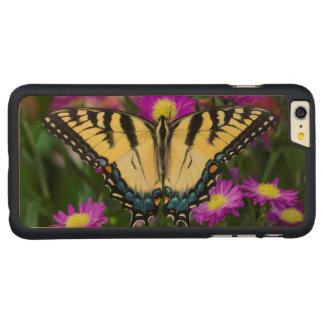 Papillon de machaon sur la marguerite coque en érable iPhone 6 plus