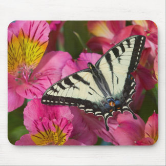Papillon de machaon sur le rose tapis de souris