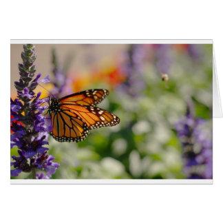 Papillon de monarque alimentant la carte vierge