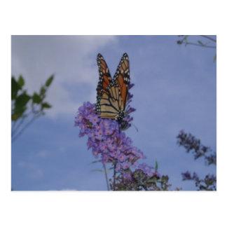 papillon de monarque carte postale