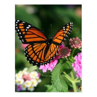Papillon de monarque sur la fleur de Lantana Carte Postale