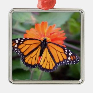 Papillon de monarque sur la fleur orange ornement carré argenté