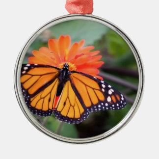 Papillon de monarque sur la fleur orange ornement rond argenté