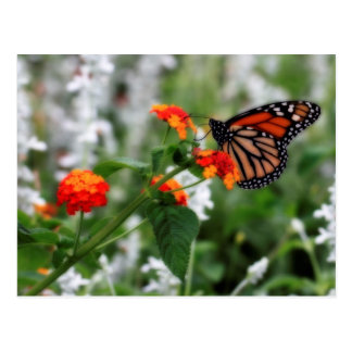 Papillon de monarque sur le Lantana orange et Carte Postale