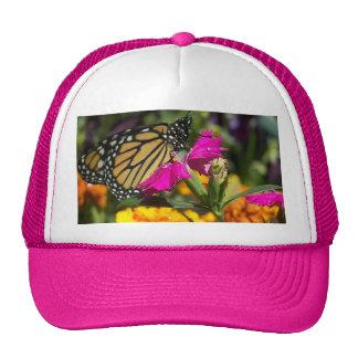 Papillon de monarque sur le souci-casquette rose casquette de camionneur