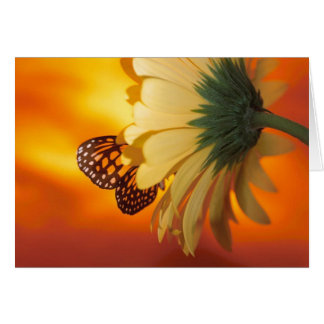 Papillon de monarque sur une carte vierge de
