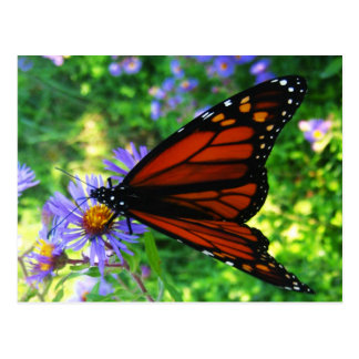 Papillon de monarque sur une fleur carte postale