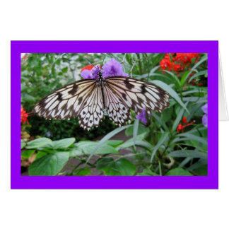 cartes de v ux papillon tropical personnalis es. Black Bedroom Furniture Sets. Home Design Ideas