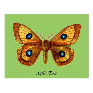 Papillon de Tau d'Aglia Cartes Postales