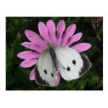 Papillon et carte postale rose de fleur