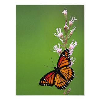 Papillon et fleur de monarque sur l'arrière - plan impression photo
