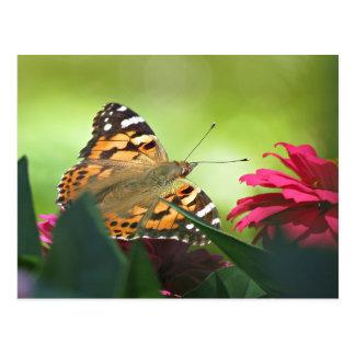 Papillon et Zinnias peints Carte Postale