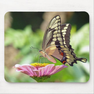 Papillon géant de machaon tapis de souris