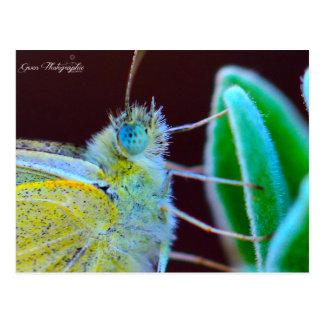 Papillon Gwen Photographie Carte Postale