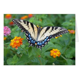 Papillon - machaon oriental de tigre carte de vœux
