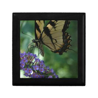 Papillon magnifique de machaon de tigre boîte à souvenirs