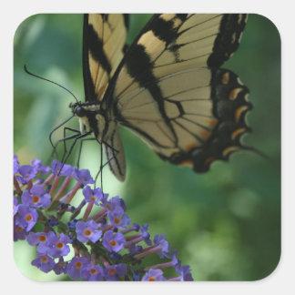 Papillon magnifique de machaon de tigre sticker carré