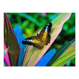 Papillon mignon photo d'art