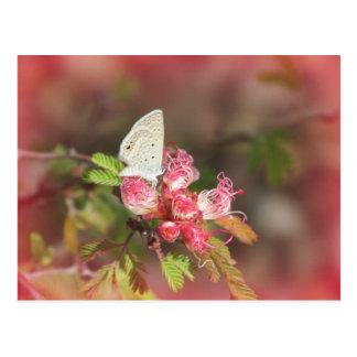 Papillon minuscule sur la carte postale rose de