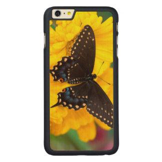 Papillon noir de machaon coque en érable iPhone 6 plus