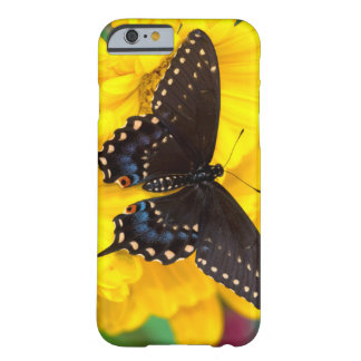 Papillon noir de machaon coque iPhone 6 barely there