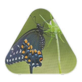 Papillon noir de machaon haut-parleur bluetooth