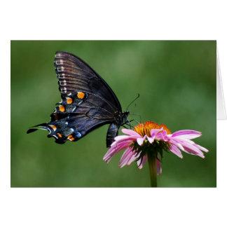 Papillon noir de machaon sur Coneflower Carte De Vœux
